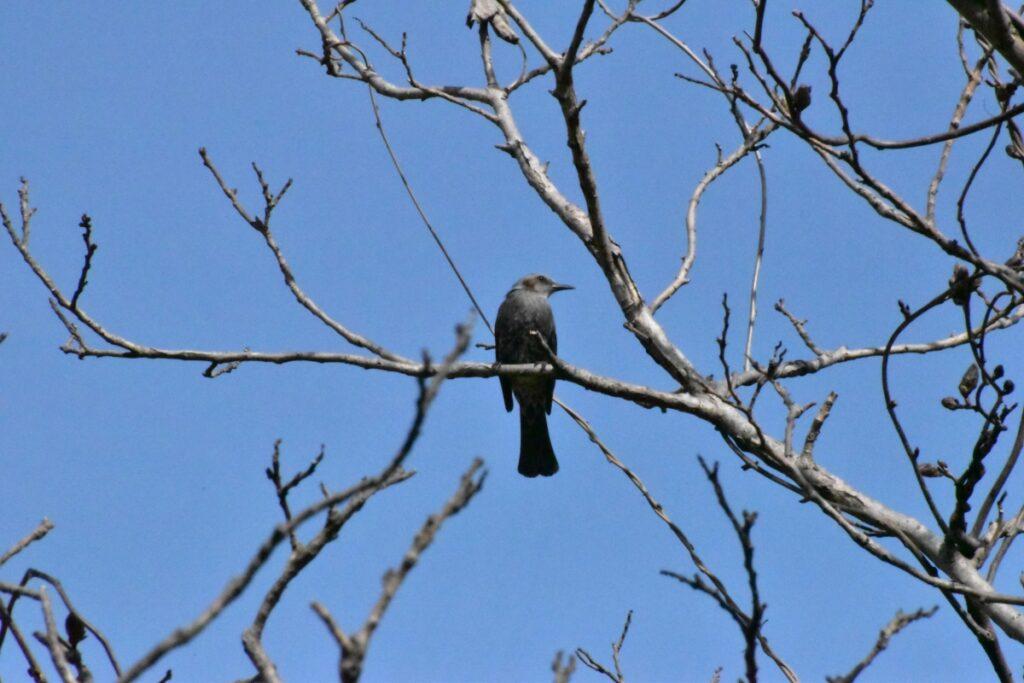 木に停まる鳥の写真