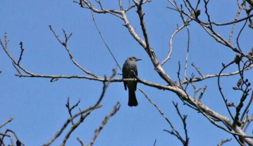 【写真】鳥