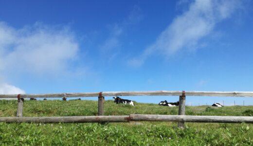 【写真】牛と青空1