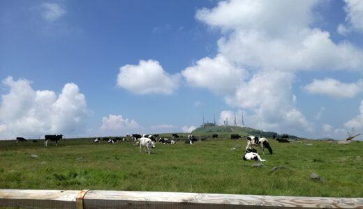 【写真】牛と青空3