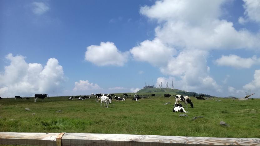 牛と青空の写真