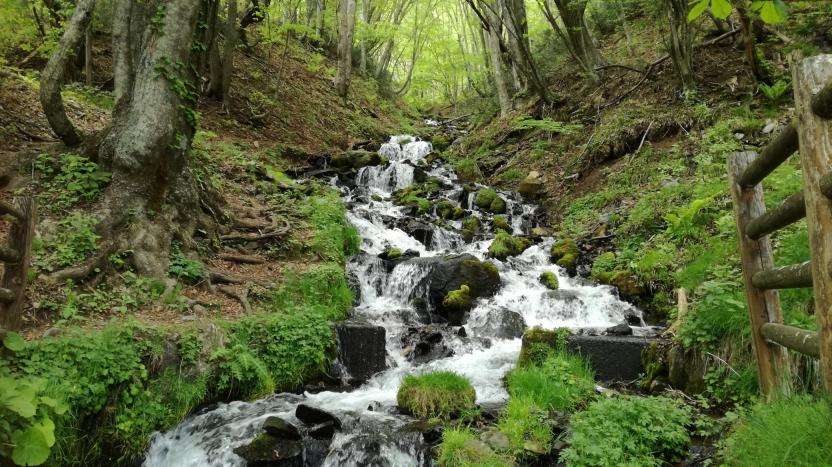 新緑の滝の写真